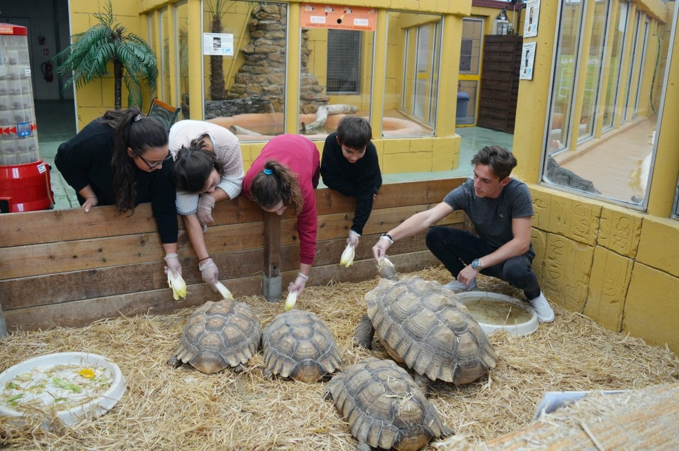 Nourissage des tortues